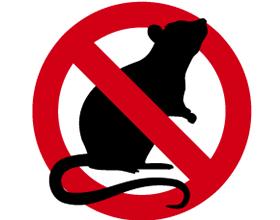 Rat Control Epsom Surrey